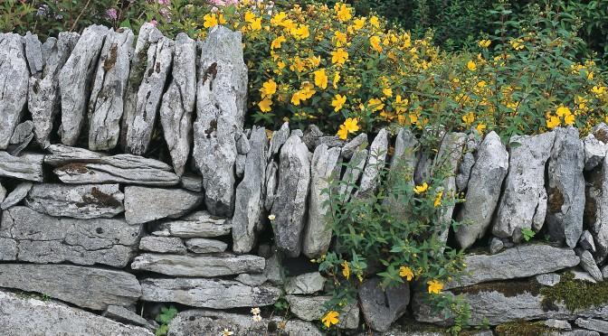 Burren Flowers Stone Wall ireland