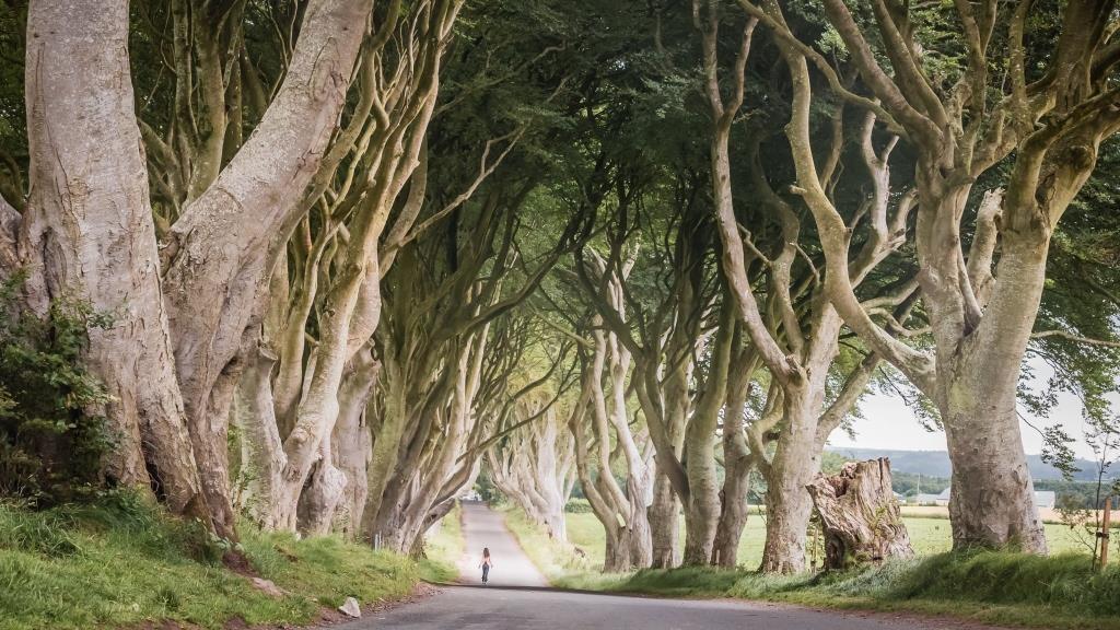 The Dark Hedges, County Antrim