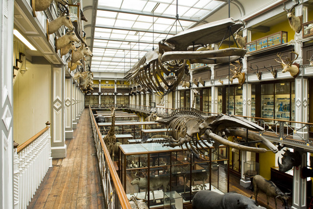 Things to do in Dublin -Natural History Museum